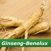 Ginseng Benelux